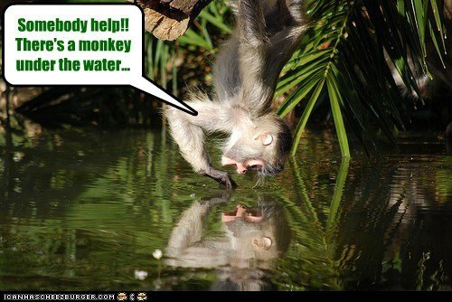 reflection trapped help confused monkey drowning - 6718003968