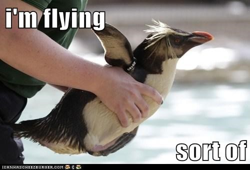 carried,sort of,wings,penguins,Close Enough,flying