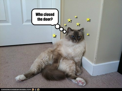 door dizzy FAIL head captions closed Cats - 6718355968