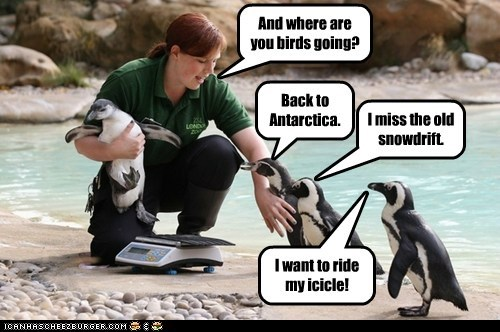 antarctica,weighing,snow,penguins,leaving,zoo,mutineer