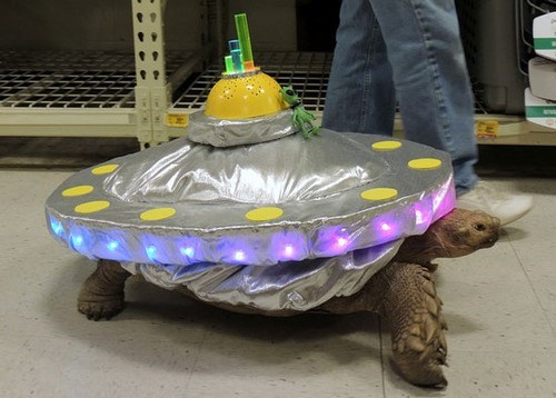 halloween costumes,space ship,turtle
