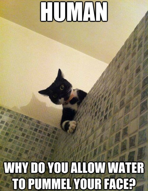 question face water captions shower Cats - 6719982080