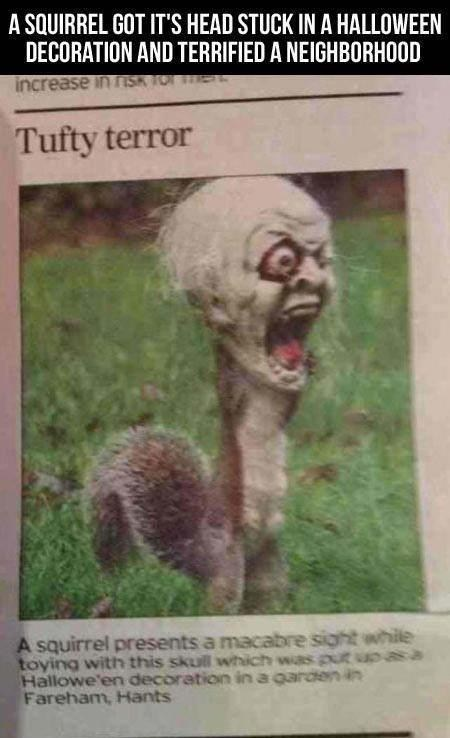 scaring children,news,halloween,squirrel,skull