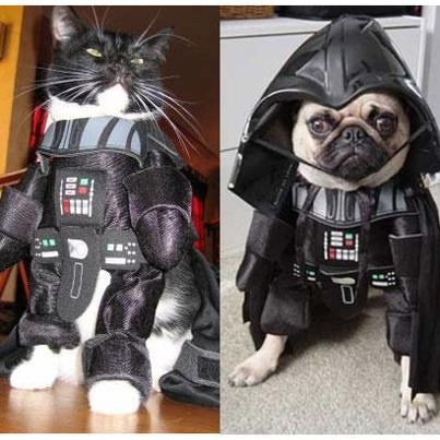costume cat dogs pug halloween kittehs r owr friends darth vadar