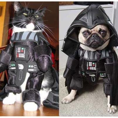costume cat pug halloween kittehs r owr friends - 6720063232