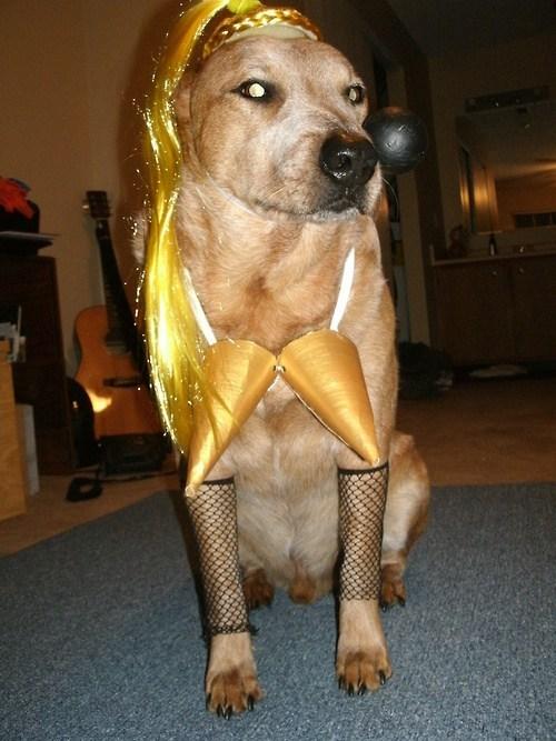 dog costumes,Madonna