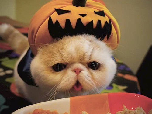 halloween,people pets,costume,around the interwebs,pumpkins