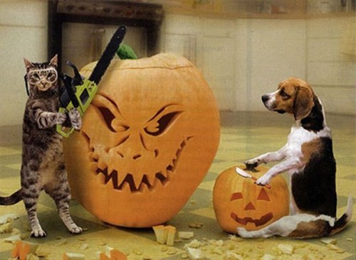 dogs,chainsaws,halloween,Interspecies Love,gogies r owr friends,jack o lanterns,Cats,pumpkins