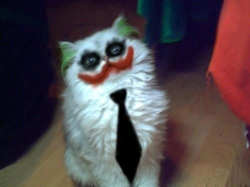 cat halloween the joker batman - 6720406784