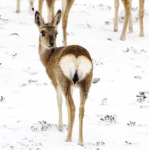 heart snow tail deer bottom squee