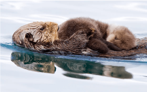 Babies snuggle tummy otters mommy cuddles squee - 6720494848