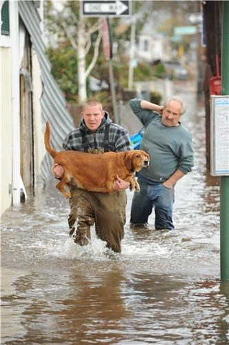 hero,dogs,best friend,new york,what breed,hurricane sandy,flood