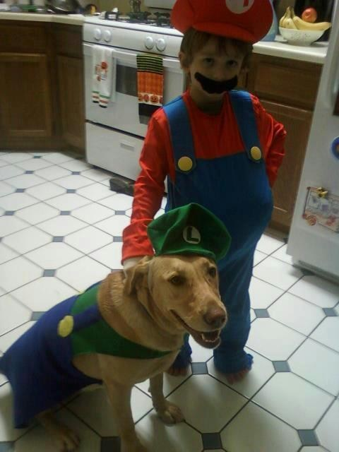 costume,dogs,labrador,halloween,video games,mario bros,Mario and Luigi