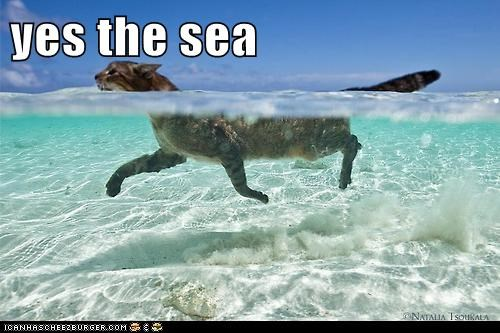 yes the sea
