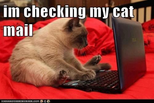 im checking my cat mail
