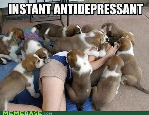 puppies instant depression antidepressant dogs captions piles happiness - 6721389824