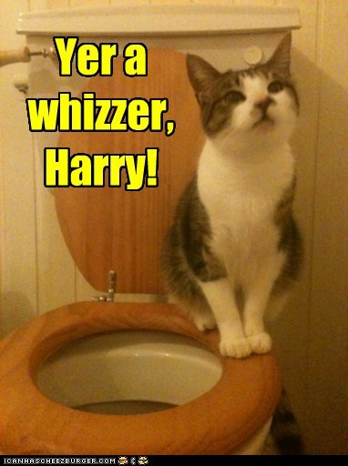 literature Harry Potter captions wizard Cats reference magic - 6721552896