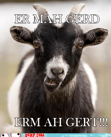 goat,Ermahgerd,animal