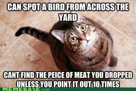 things lolcats birds smart the internet food Cats piece* - 6721754368