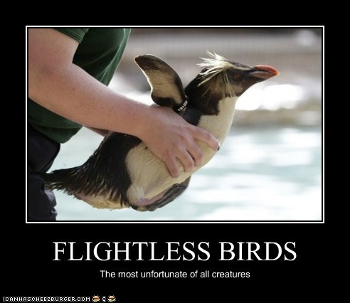 FLIGHTLESS BIRDS The most unfortunate of all creatures