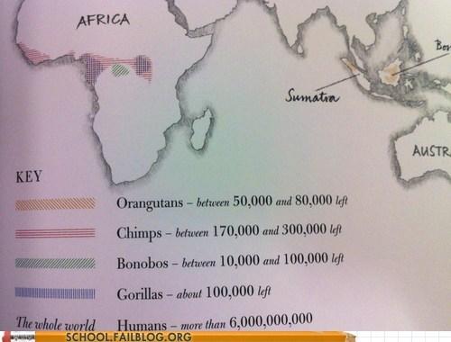 gorillas hoomanz primates - 6722727424
