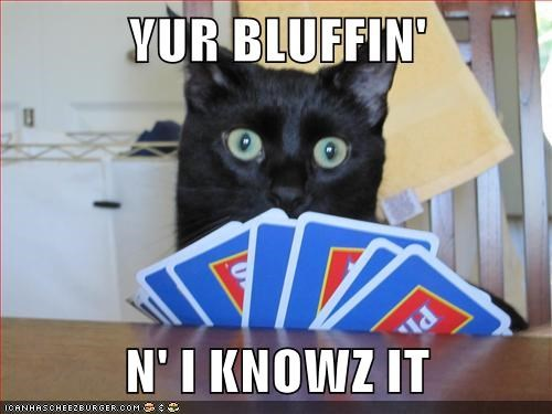 game captions cards play bluff poker Cats