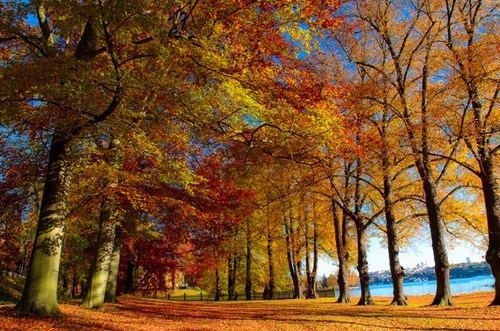 trees,halloween,park,pretty colors,fall