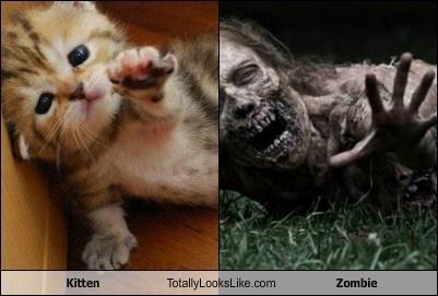 cat TLL kitten zombie funny - 6723308032