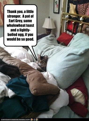 bed flu captions cough egg rest tea toast sick Cats - 6723341312