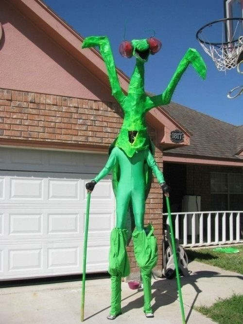 halloween costumes,praying mantis,basketball