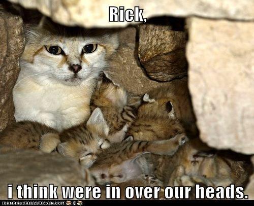 kitten kids captions too deep Cats - 6723651072