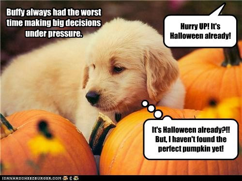 HAPPY HALLOWEEN TO ALL THE CHEEZPEEPS! - I Has A Hotdog - Dog Pictures -  Funny pictures of dogs - Dog Memes - Puppy pictures - doge