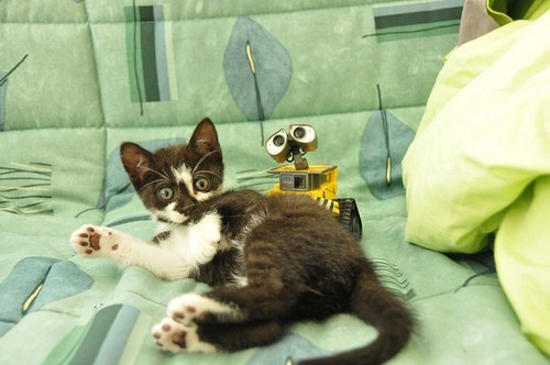 cyoot kitteh of teh day,kitten,disney,toys,wall.e,pixar,Cats