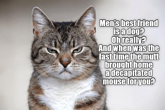 funny memes Memes Cats cat memes - 6724357