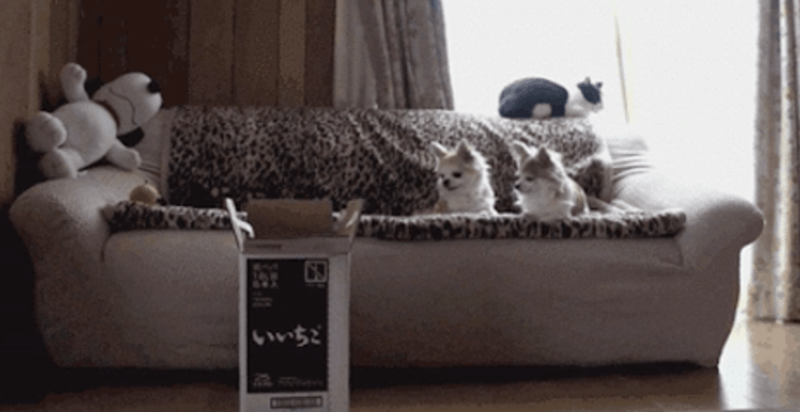 cute cats playing with boxes