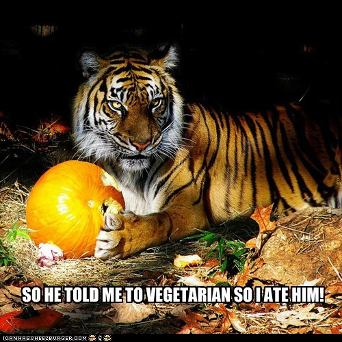pumpkins,eating people,tiger,angry,vegetarian