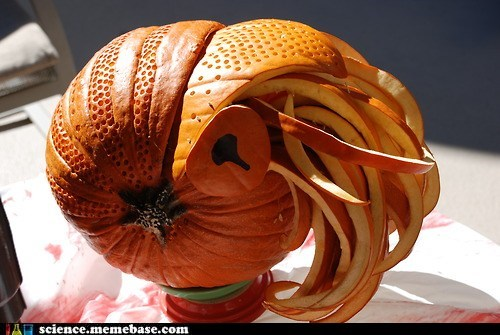 pumpkins,art,nautilus,carving