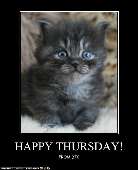 Happy Thursday Lolcats Lol Cat Memes Funny Cats Funny Cat Pictures With Words On Them Funny Pictures Lol Cat Memes Lol Cats