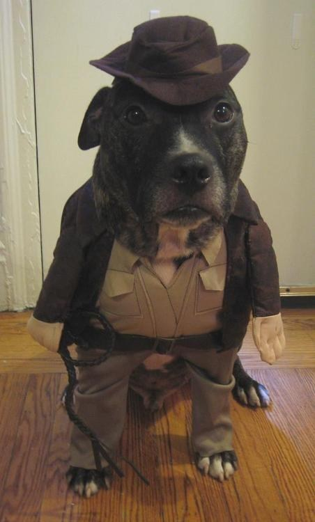 Indiana Jones dog costumes