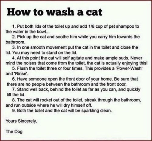 dogs,baths,trolling,instructions,tricks,How To,Cats,toilets,bathing