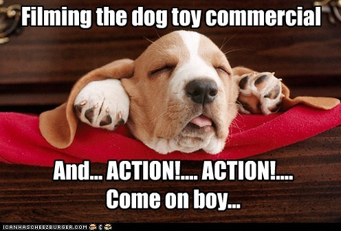 Filming the dog toy commercial And... ACTION!.... ACTION!.... Come on boy...