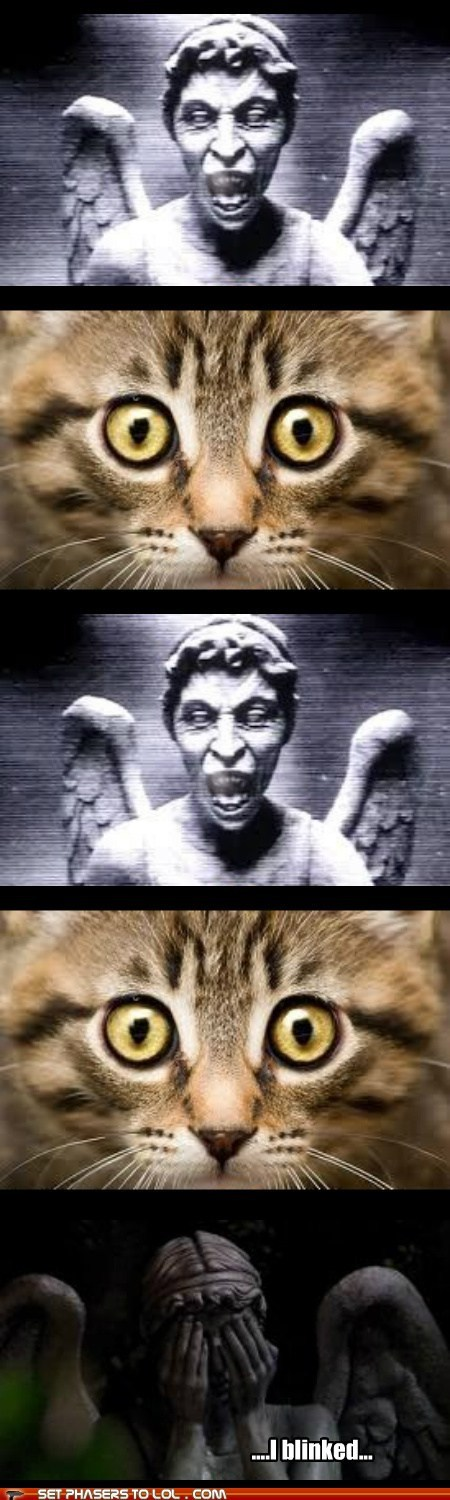 weeping angel,cat,blinked,staring contest,dont-blink