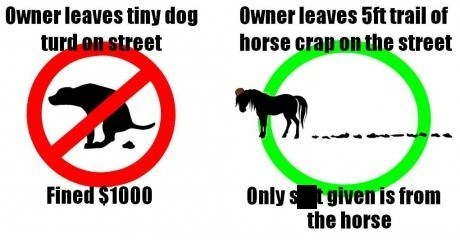 pets fines dog poop horses