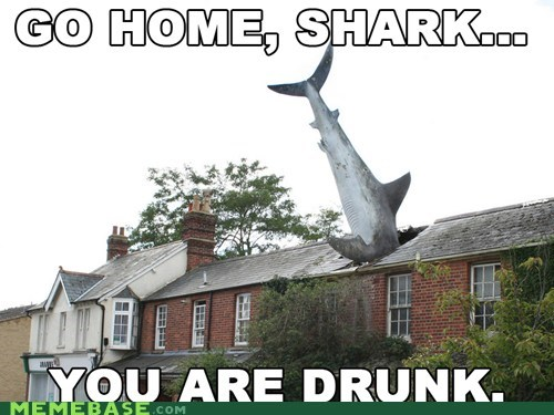 go home,drunk,house,shark