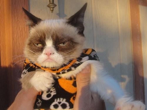 halloween Cats - 6726542080