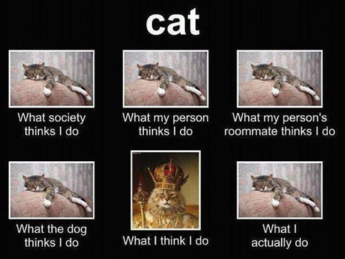 what i think i do,what people think i do,Memes,Cats,delusional,self