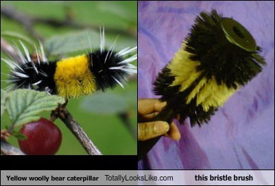 brush,TLL,funny,caterpillar