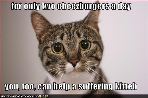 Cheezburger Image 672721152