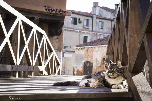 Italy photos cat photos venice Cats - 6727429