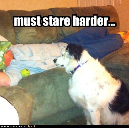 dogs,Y U NO,Staring,couch,what breed,sleeping